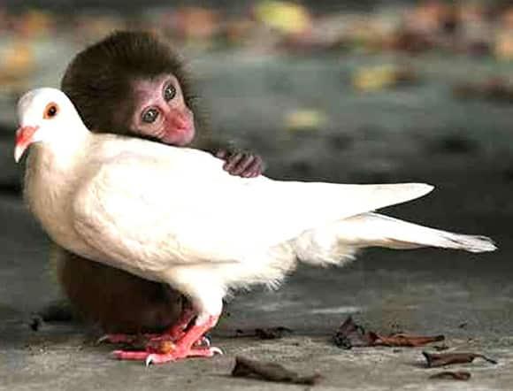 oiseau-singe